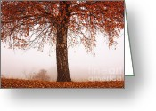 Fall Leaves Photo Greeting Cards - Red Tree Greeting Card by Evgeni Dinev