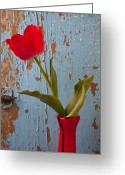 Peeling Greeting Cards - Red Tulip Bending Greeting Card by Garry Gay