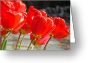 Seasons Framed Prints Prints Greeting Cards - Red Tulip Flowers art prints Spring Florals Greeting Card by Baslee Troutman Fine Art Photography
