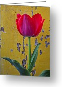 Peeling Greeting Cards - Red tulip with yellow wall Greeting Card by Garry Gay