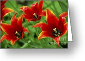 Pointed Greeting Cards - Red tulips Greeting Card by Elena Elisseeva