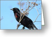 Blackbirds Greeting Cards - Red-Winged Blackbird . 40D5718 Greeting Card by Wingsdomain Art and Photography