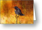 Larry Walker Greeting Cards - Red-Winged Blackbird Abstract Greeting Card by J Larry Walker
