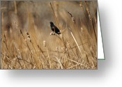 Blackbirds Greeting Cards - Red Winged Blackbird Greeting Card by Ernie Echols