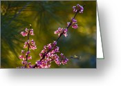 Blue Ridge Photographs Greeting Cards - Redbud Greeting Card by Rob Travis
