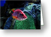 Sea Life Digital Art Greeting Cards - Redfish Greeting Card by David Lee Thompson