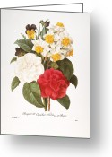 Viola Tricolor Greeting Cards - Redoute: Bouquet, 1833 Greeting Card by Granger