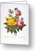 Rosa Chinensis Greeting Cards - Redoute: Roses, 1833 Greeting Card by Granger
