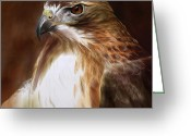 Red-tailed Hawk Greeting Cards - RedTailed Hawk Portrait Greeting Card by Steve Goad