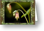 Close-up Photos Greeting Cards - Redwood Columbine Greeting Card by Bell And Todd
