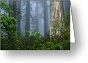 Del Norte Greeting Cards - Redwoods in Blue Fog Greeting Card by Greg Nyquist