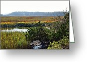 Driveways Greeting Cards - Reeds and Marshes Greeting Card by Jim Goldseth