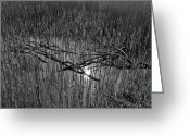 Abstract Pyrography Greeting Cards - Reeds and Tree Branches Greeting Card by David Pyatt