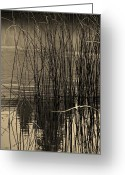 Copyright Protected. Greeting Cards - Reeds Greeting Card by Barbara St Jean