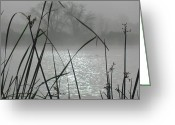 Austin Pyrography Greeting Cards - Reeds in Fog Greeting Card by Diane Austin