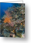 Oceania Greeting Cards - Reef Scape In The Solomon Islands Greeting Card by Steve Jones