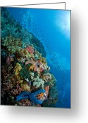 Coral Reef Greeting Cards - Reef Scene With Corals And Fish Greeting Card by Mathieu Meur