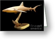 Still Life Sculpture Greeting Cards - Reef Shark Greeting Card by Kjell Vistnes