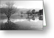 Flooding Greeting Cards - Reflected trees Greeting Card by Gaspar Avila