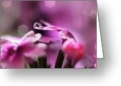Custom Art Photo Greeting Cards - Reflecting on Pink Greeting Card by Lisa Knechtel
