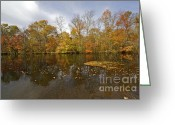 Selection Greeting Cards - Reflection of Autumn Colors on the Canal Greeting Card by David Letts