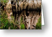 Cypress Knees Digital Art Greeting Cards - Reflection of Cypress Knees Greeting Card by Barbara Bowen