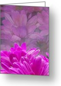 Flower Greeting Card Greeting Cards - Reflection of Flowers in Window - 2 Greeting Card by Tam Graff