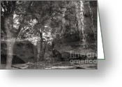 Ghostly Greeting Cards - Reflection of Trees with Rocks and Waterfall Greeting Card by Janeen Wassink Searles
