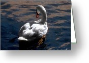 Seabirds Digital Art Greeting Cards - Reflections Greeting Card by Dale   Ford