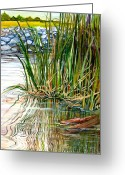 Reeds Reflections Greeting Cards - Reflections Greeting Card by Elaine Hodges