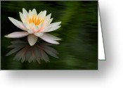 Tropical Gardens Greeting Cards - Reflections of a Water Lily Greeting Card by Sabrina L Ryan
