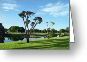 Tropical Golf Course Greeting Cards - Reflections Of Summer Greeting Card by Sheila Silverstein
