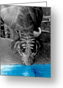 Waterhole Greeting Cards - Reflections of the Wild Negative Greeting Card by DigiArt Diaries by Vicky Browning