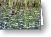 Reflections In Water Greeting Cards - Reflections on Duck Pond Greeting Card by Sharon  Talson