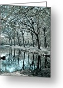 Forrest  Greeting Cards - Reflections Greeting Card by Photodream Art