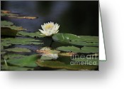 Lilly Pads Photo Greeting Cards - Reflective Lilly Greeting Card by Deborah Benoit