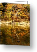 Indiana Autumn Greeting Cards - Reflex Greeting Card by Ed Smith