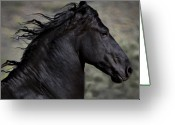 Horse Greeting Cards - Regal Greeting Card by Jean Hildebrant