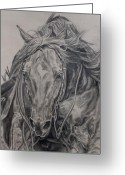 Quarter Horses Greeting Cards - Reiner Greeting Card by Jana Goode