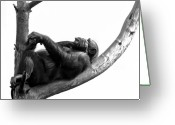 Primates Greeting Cards - Relax Greeting Card by Gert Lavsen