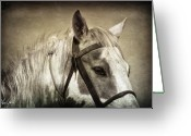 Caballo Greeting Cards - Relaxing After the Ride Greeting Card by Christine Hauber