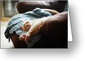 Cat Eyes Greeting Cards - Relaxing Cat Greeting Card by Image(s) by Sara Lynn Paige
