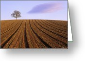 Alone Greeting Cards - Remote tree in a ploughed field Greeting Card by Bernard Jaubert