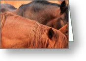 Quarter Horses Greeting Cards - Remuda Greeting Card by Jim Sauchyn