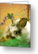 Adorable Bunny Greeting Cards - Renewal Greeting Card by Lois Bryan