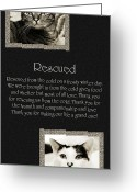 Fine Art Cat Greeting Cards - Rescued Greeting Card by Andee Photography
