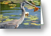 Blue Heron Photo Greeting Cards - Resignation Greeting Card by Fraida Gutovich