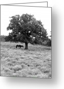 Respite Greeting Cards - Respite in Black and White Greeting Card by James Granberry