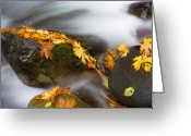 Fall Leaves Photo Greeting Cards - Respite Greeting Card by Mike  Dawson