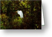 Cypress Digital Art Greeting Cards - Resting Egret Greeting Card by J Larry Walker